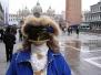 Carnival of Venice: Luca Stecca - Abano Terme - Padova (Italy)